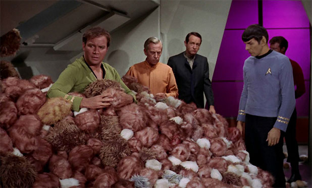 Ever Wonder How Many Tribbles Could Fit In Your Home?
